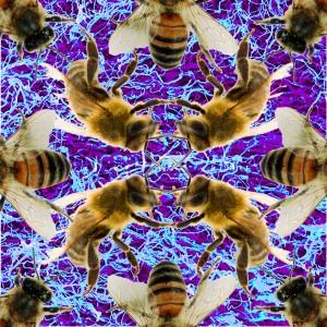 bee fungis